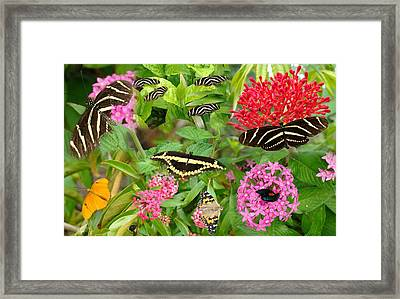 Butterfly High Framed Print