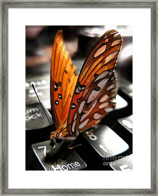 Framed Print featuring the photograph Butterfly Home At 7 by Jennie Breeze
