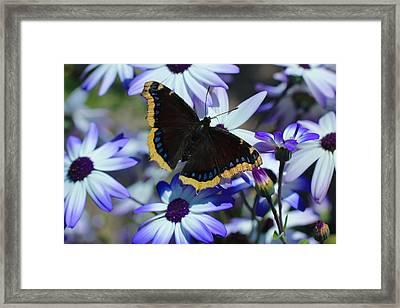 Butterfly In Blue Framed Print