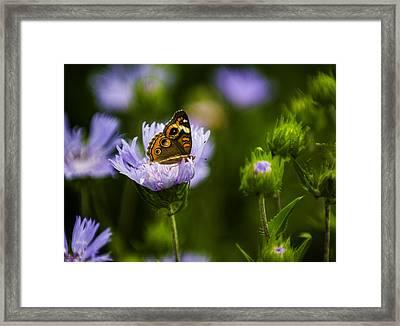 Butterfly In Field Framed Print