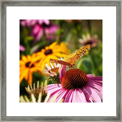 Butterfly In Paradise Framed Print by Bill Wakeley