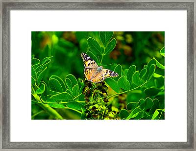 Framed Print featuring the photograph Butterfly In Paradise by Gunter Nezhoda