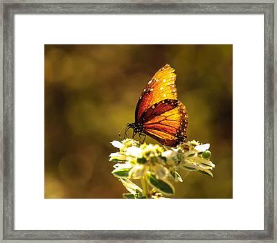 Butterfly In Sun Framed Print