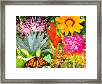 Butterfly In The Flowers Framed Print by Van Ness