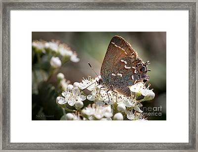 Framed Print featuring the photograph Butterfly In The Garden by Todd Blanchard