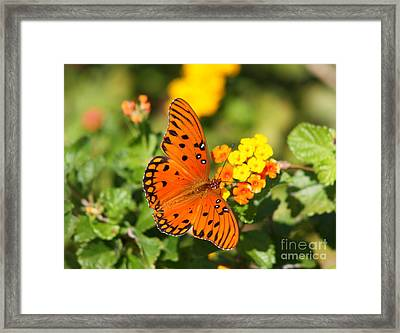 Butterfly In The Glades - Gulf Fritillary Framed Print