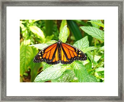 Butterfly In The Plants Framed Print by Van Ness