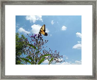 Butterfly In The Wild Framed Print