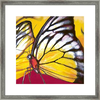 Butterfly - Insect Stylised Pop Art Drawing Potrait Poser Framed Print by Kim Wang