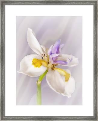 Butterfly Iris Framed Print