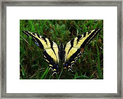 Butterfly Framed Print by Jeri lyn Chevalier