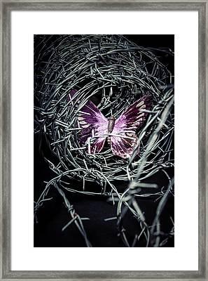 Butterfly Framed Print by Joana Kruse