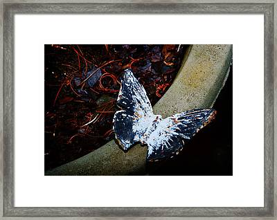 Butterfly Framed Print by Kara  Stewart