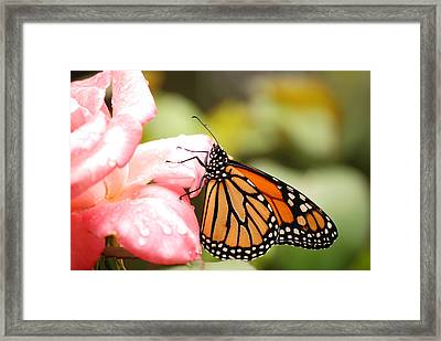 Framed Print featuring the photograph Butterfly  by Kathy Gibbons