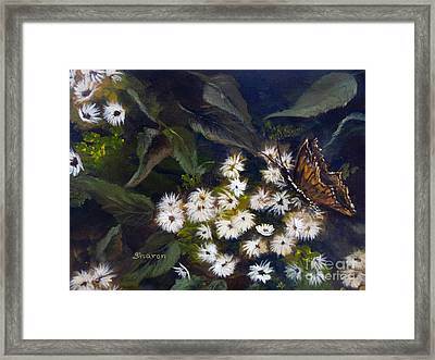 Butterfly Kisses Framed Print by Sharon Burger