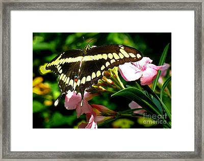 Framed Print featuring the photograph Butterfly by Kristine Merc