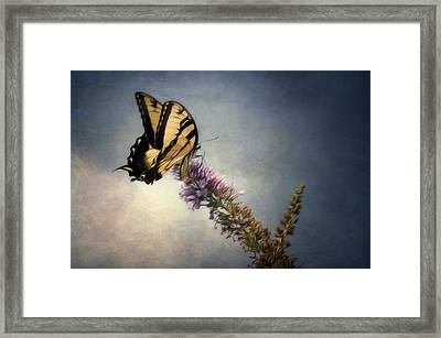 Butterfly Landing Framed Print by Jeff Burton