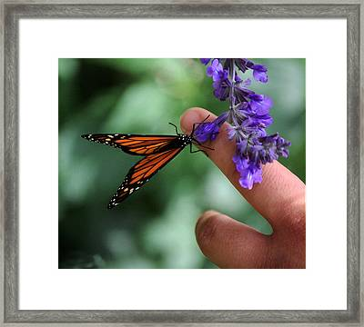 Framed Print featuring the photograph Butterfly by Leticia Latocki