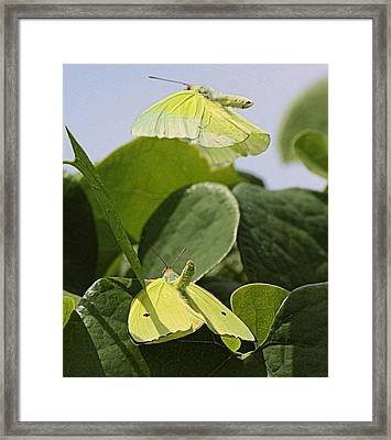 Butterfly Love Framed Print by Dart and Suze Humeston