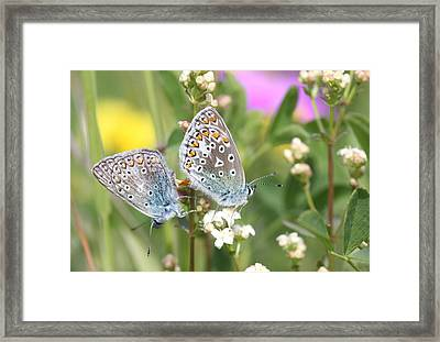 Butterfly Lovers Framed Print