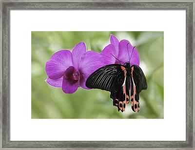 Butterfly Magic Framed Print