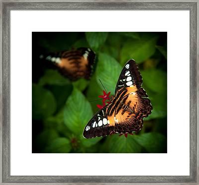 Butterfly Delight Framed Print by Karen Wiles