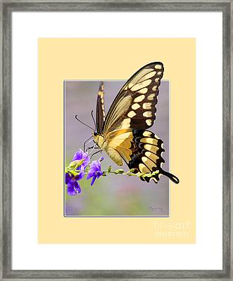 Framed Print featuring the photograph Butterfly by Mariarosa Rockefeller