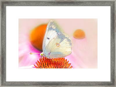 Butterfly Framed Print by Marion Johnson
