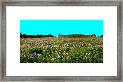 Butterfly Meadow Framed Print by Larry Trupp
