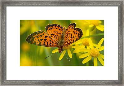 Framed Print featuring the photograph Butterfly by James Peterson