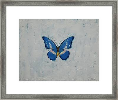 Butterfly Framed Print by Michael Creese