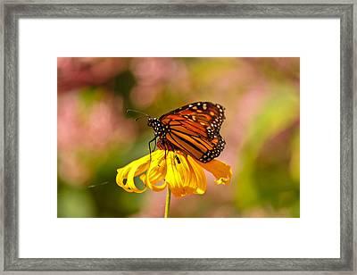 Butterfly Monet Framed Print