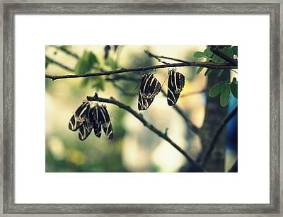 Butterfly Nap Framed Print