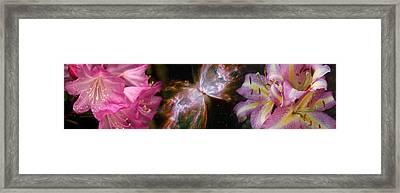 Butterfly Nebula With Iris And Pink Framed Print by Panoramic Images