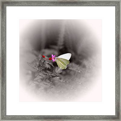 Butterfly On A Pink Flower Framed Print by Tracie Kaska