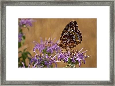 Butterfly On Bee Balm Framed Print