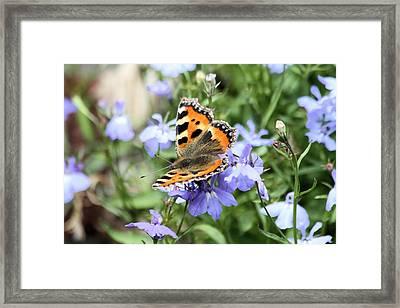 Butterfly On Blue Flower Framed Print by Gordon Auld