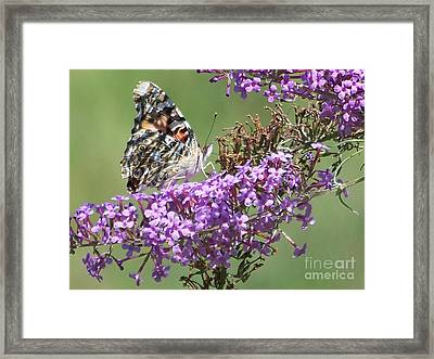 Framed Print featuring the photograph Painted Lady Butterfly by Eunice Miller