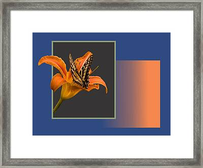 Butterfly On Day Lily Framed Print