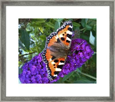 Butterfly On Flower Framed Print by Beril Sirmacek