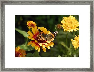 Butterfly On Flower Framed Print by Charles Beeler