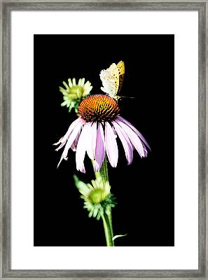 Butterfly On Flower Framed Print by Tommytechno Sweden