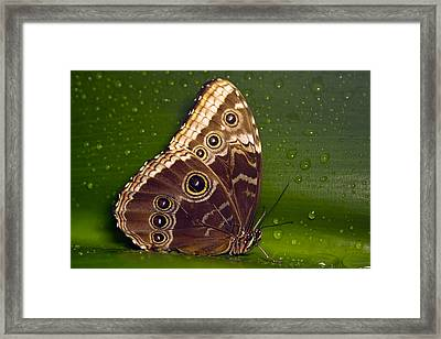 Butterfly On Green  Framed Print by Sebastiaan Bosma