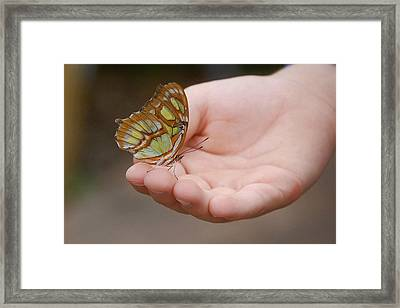 Framed Print featuring the photograph Butterfly On Hand by Leticia Latocki