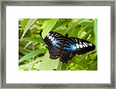 Framed Print featuring the photograph Butterfly On Leaf   by Lars Lentz