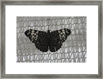 Framed Print featuring the photograph Butterfly On Net by Bill Woodstock