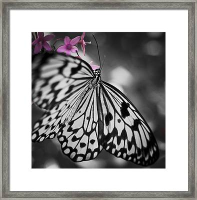 Butterfly On Pink Flowers Framed Print