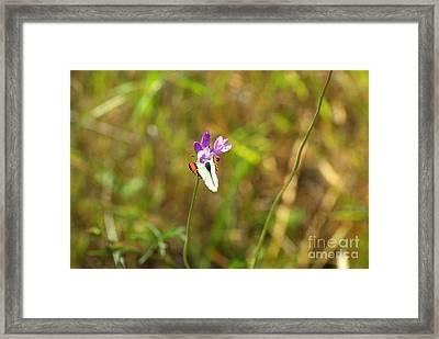 Butterfly On Purple 1.2608 Framed Print by Stephen Parker