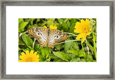Butterfly On Yellow Flower Framed Print by Don Durfee