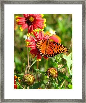 Butterfly One Framed Print by Peggy Burley